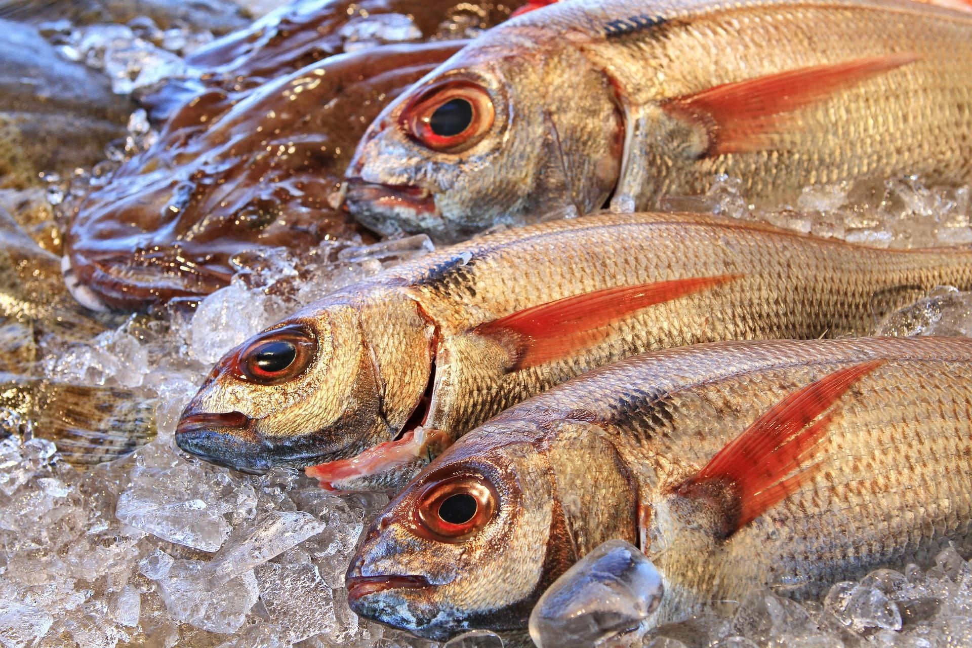 Pesce italiano: i più esportati all'estero