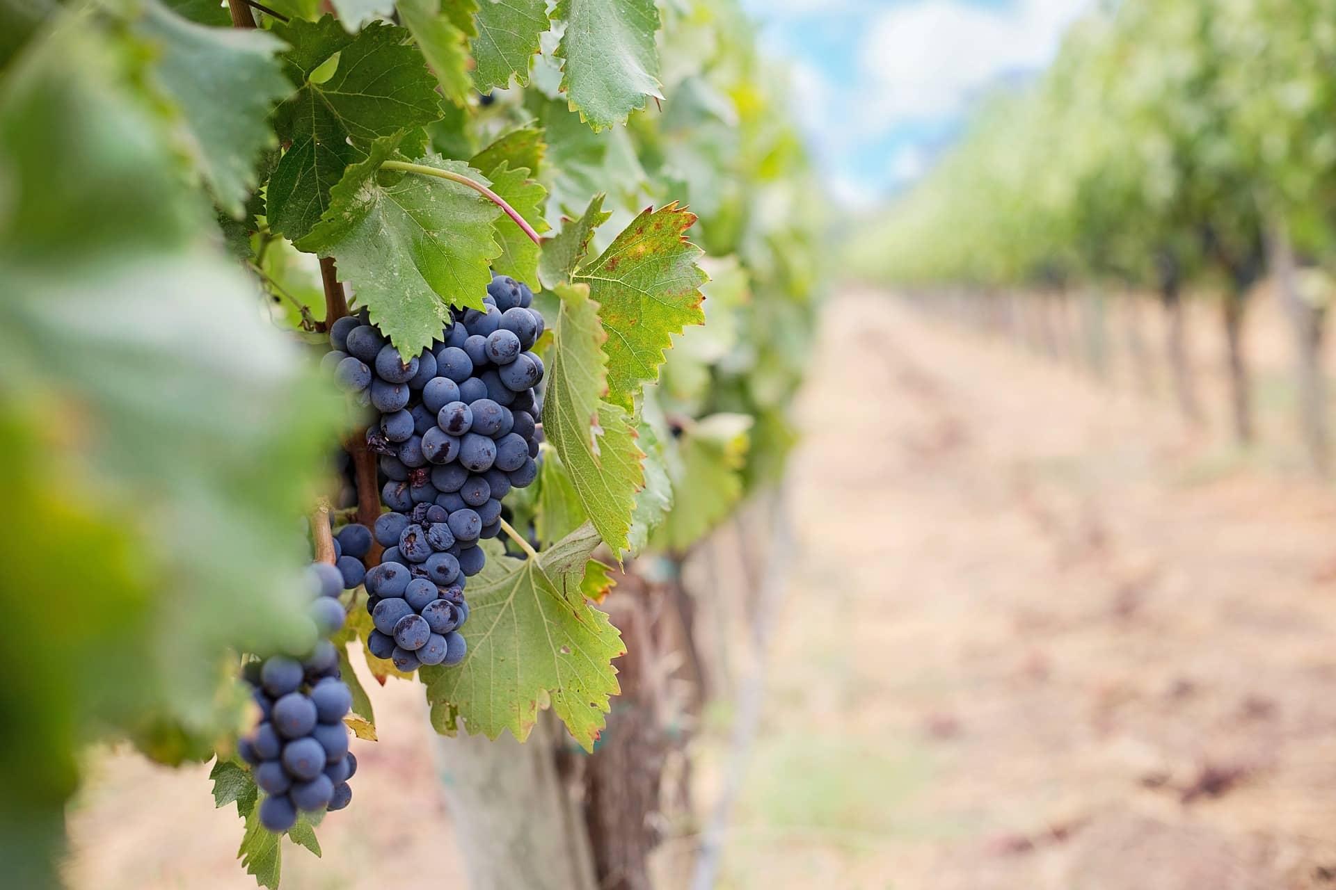 Italia leader dell'esportazione di vino in Svizzera