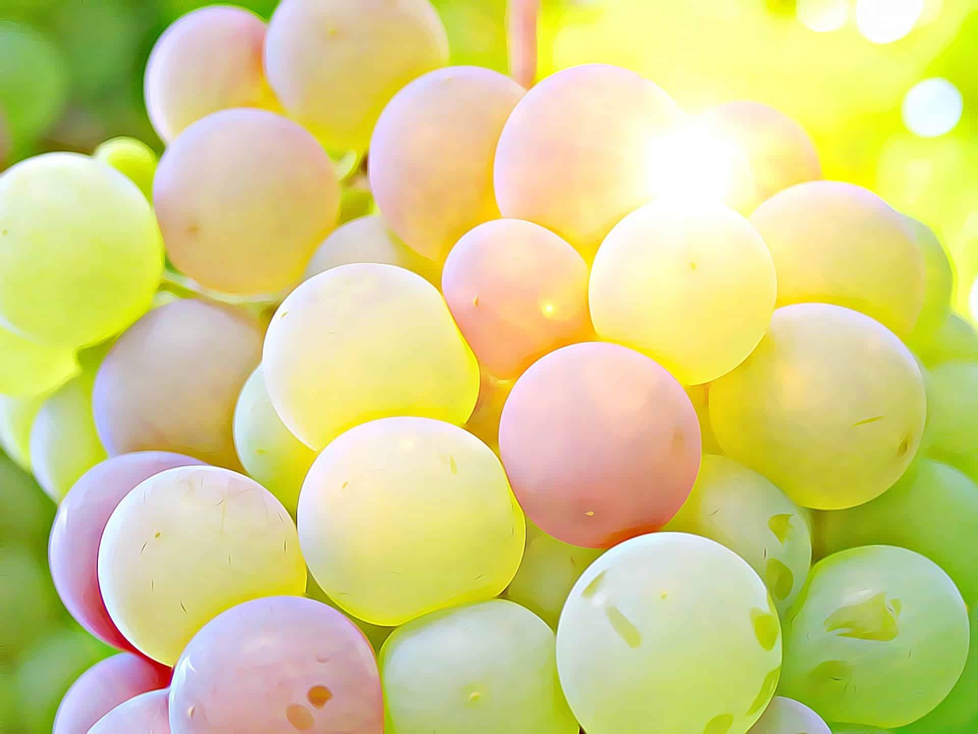 L'uva può aiutare contro l'Alzheimer