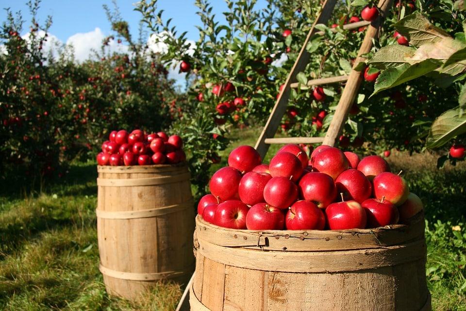 Pesticidi sulle mele: improrogabile ormai un intervento legislativo